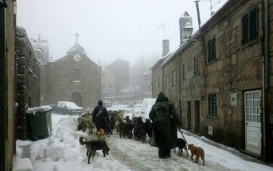 Sabugueiro - Neve e ovelhas
